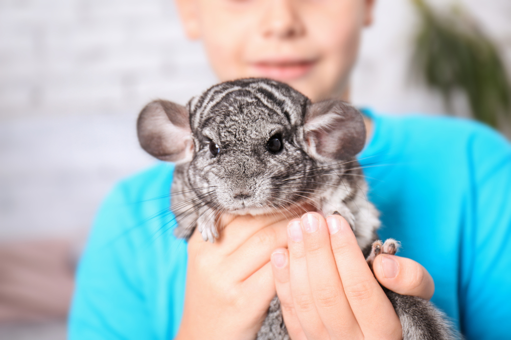 How To Find Exotic Animals For Sale