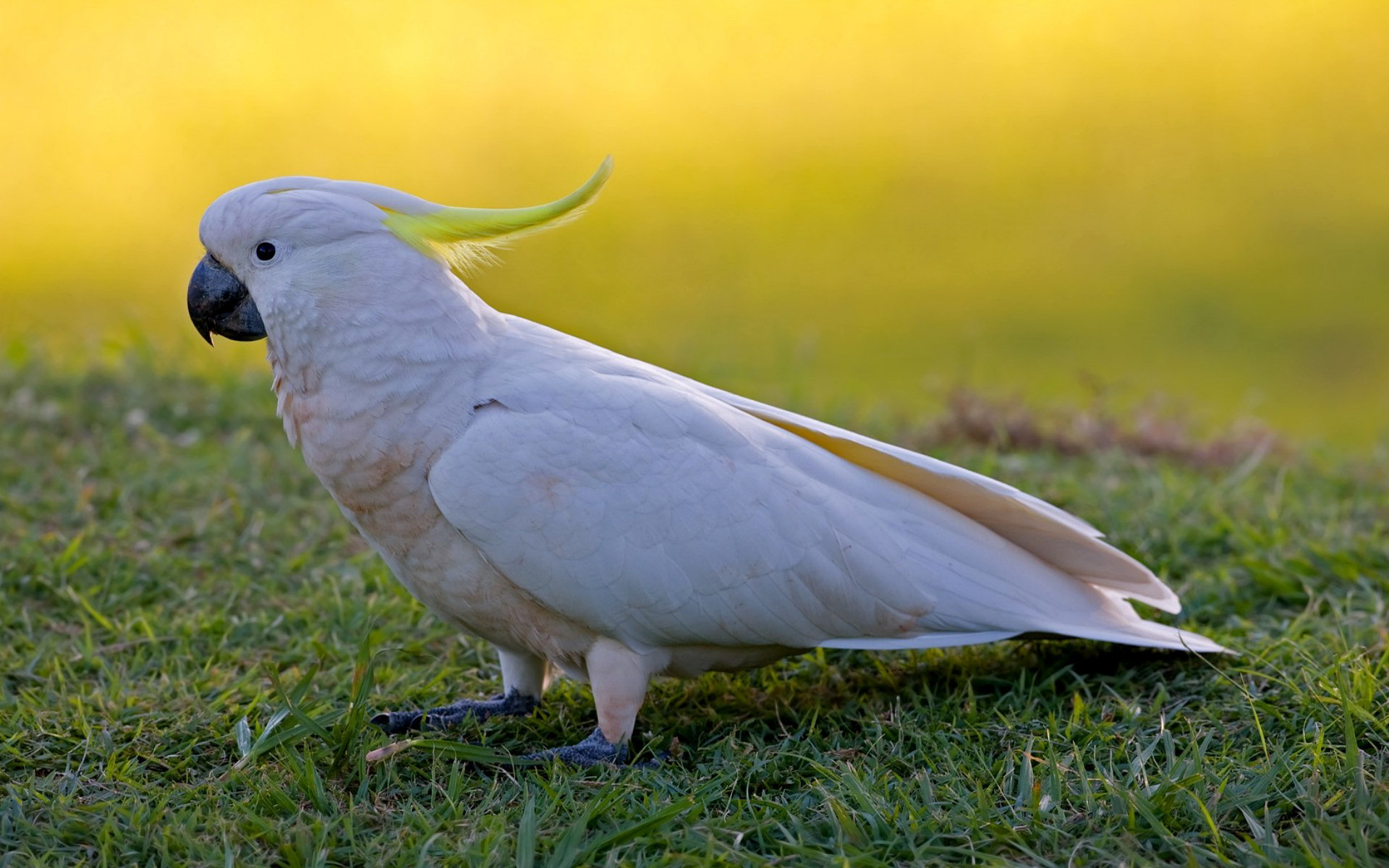 Important Tips When Evaluating Cockatoo For Sale